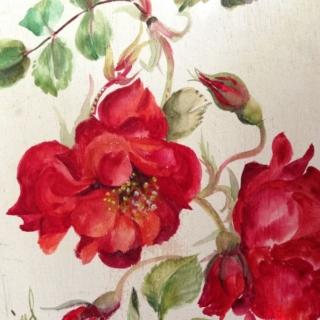 Roses Rouge Eclatant
