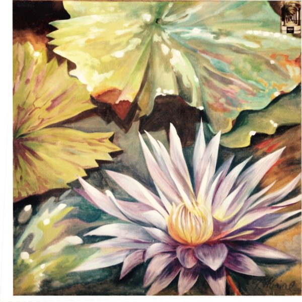 Lotus Fauviste - © Josiane ABRIAL