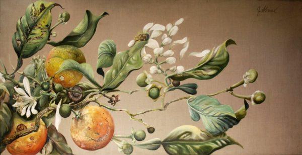 L'oranger 4 saisons
