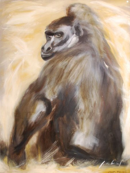 Gorille se grattant