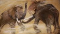 Combats d'éléphants