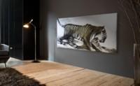 Tigre sur fond gris