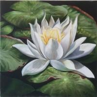 Lotus Blanc Eau Noire