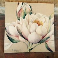 Lotus premier